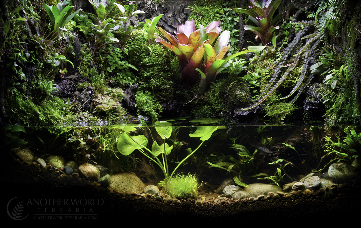 Build 1 - 29 Gallon Paludarium - Finished Tank - ©Matthew Schwartz - www.AnotherWorldTerraria.com
