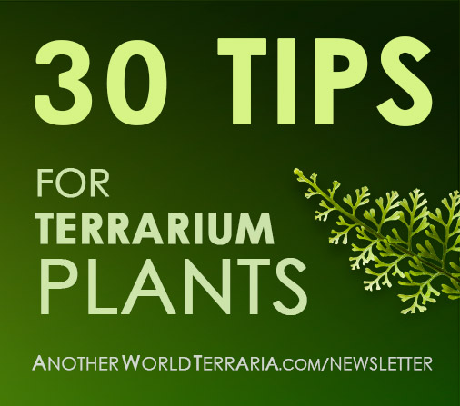 30 days of tips for miniature tropical plants.