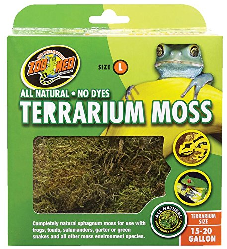 Bad Terrarium Moss