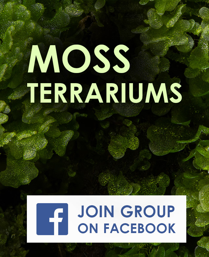 Moss Terrariums Facebook Group