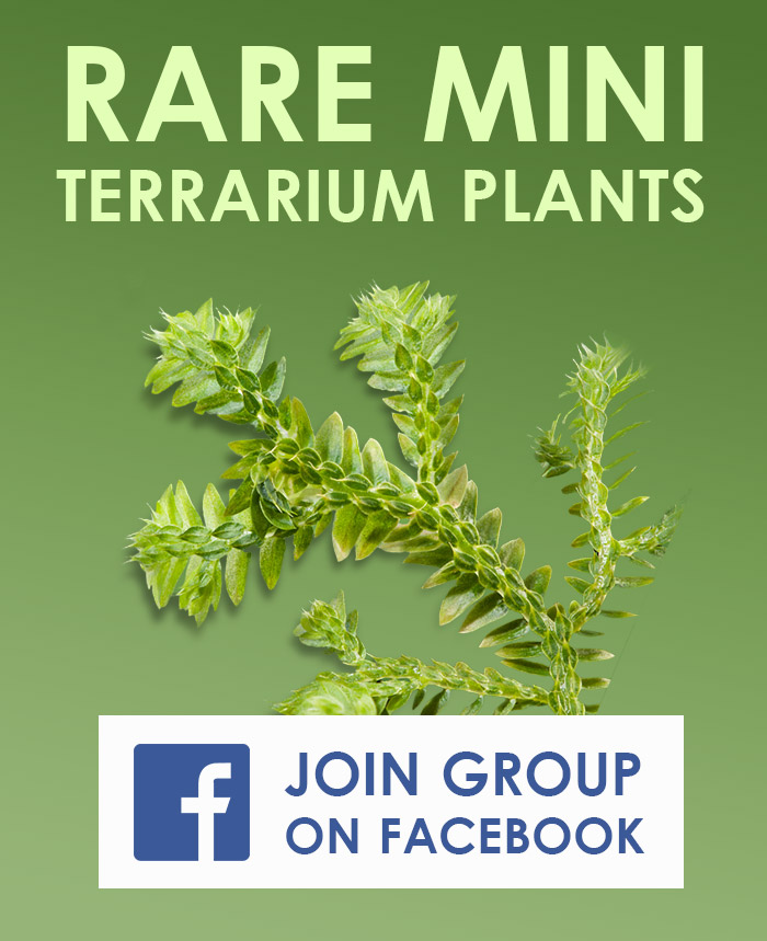 Rare Miniature Terrarium Plants Facebook Group