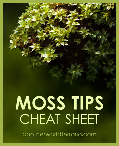 Moss Tips Cheat Sheet