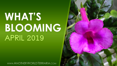 What's Blooming - 2019 April