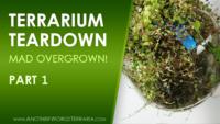 Rare Plant Terrarium Teardown (Crazy Overgrown!) Part 1