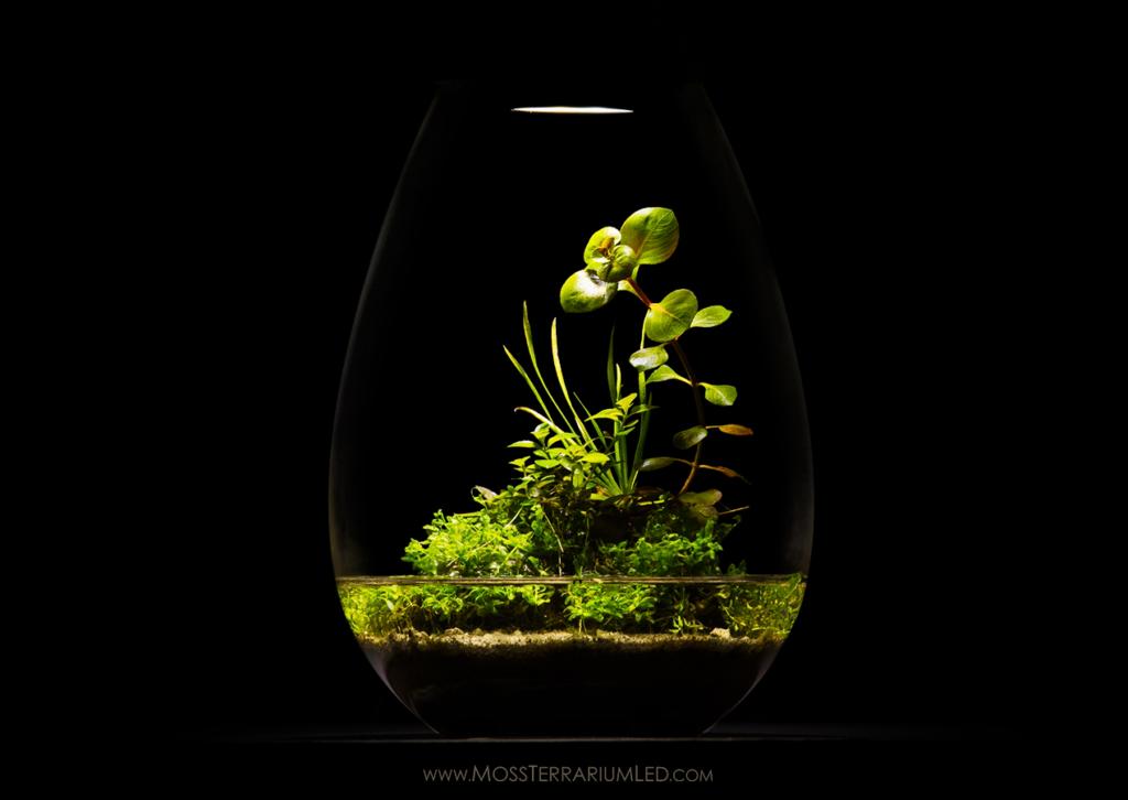 Wabi Kusa inside a Moss Terrarium LED Light