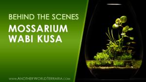 Behind the Scenes Build - Mossarium LED Wabi Kusa