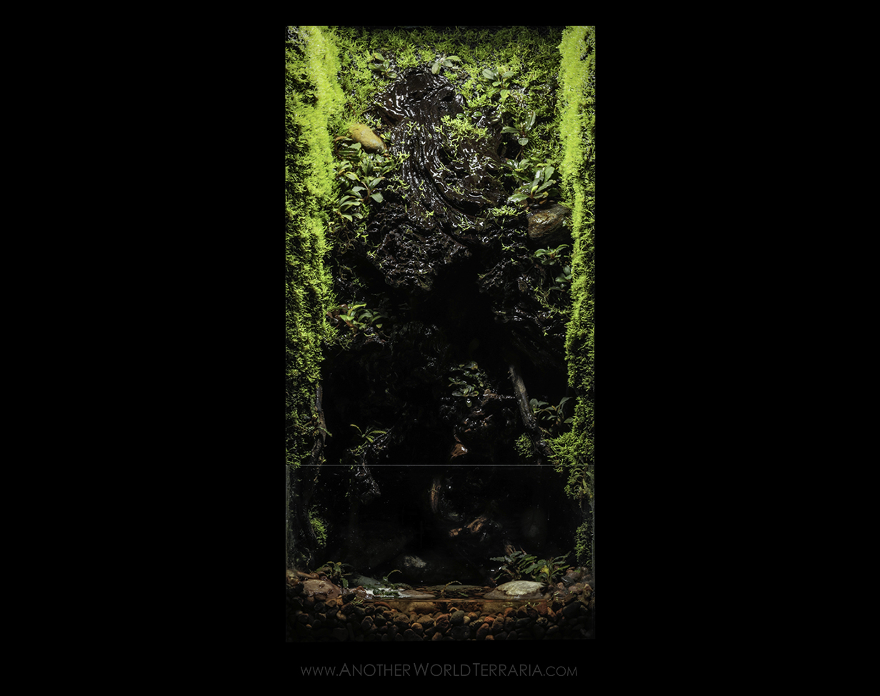 10 gallon vertical drip wall terrarium