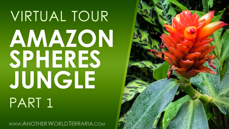 Amazon Spheres Jungle Tour Part 1