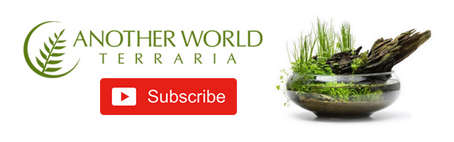 Subscribe to Another World Terraria on YouTube