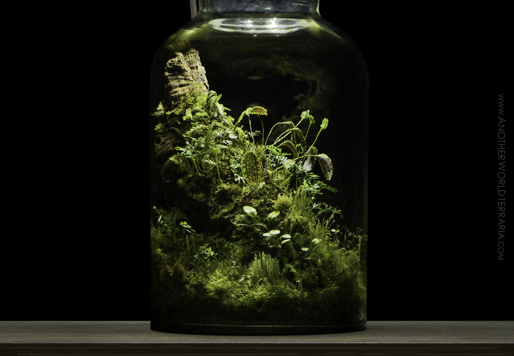Lamp terrarium close up