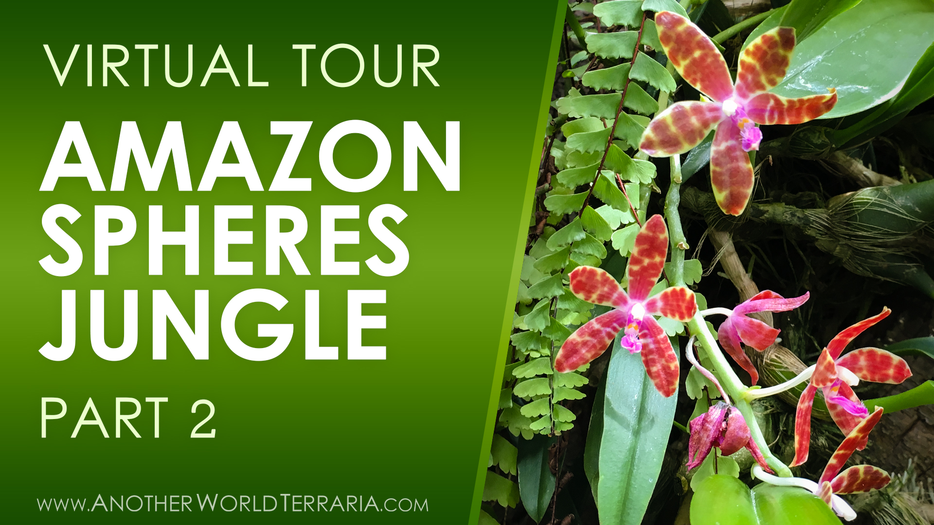 Amazon Spheres Jungle Tour Part 2