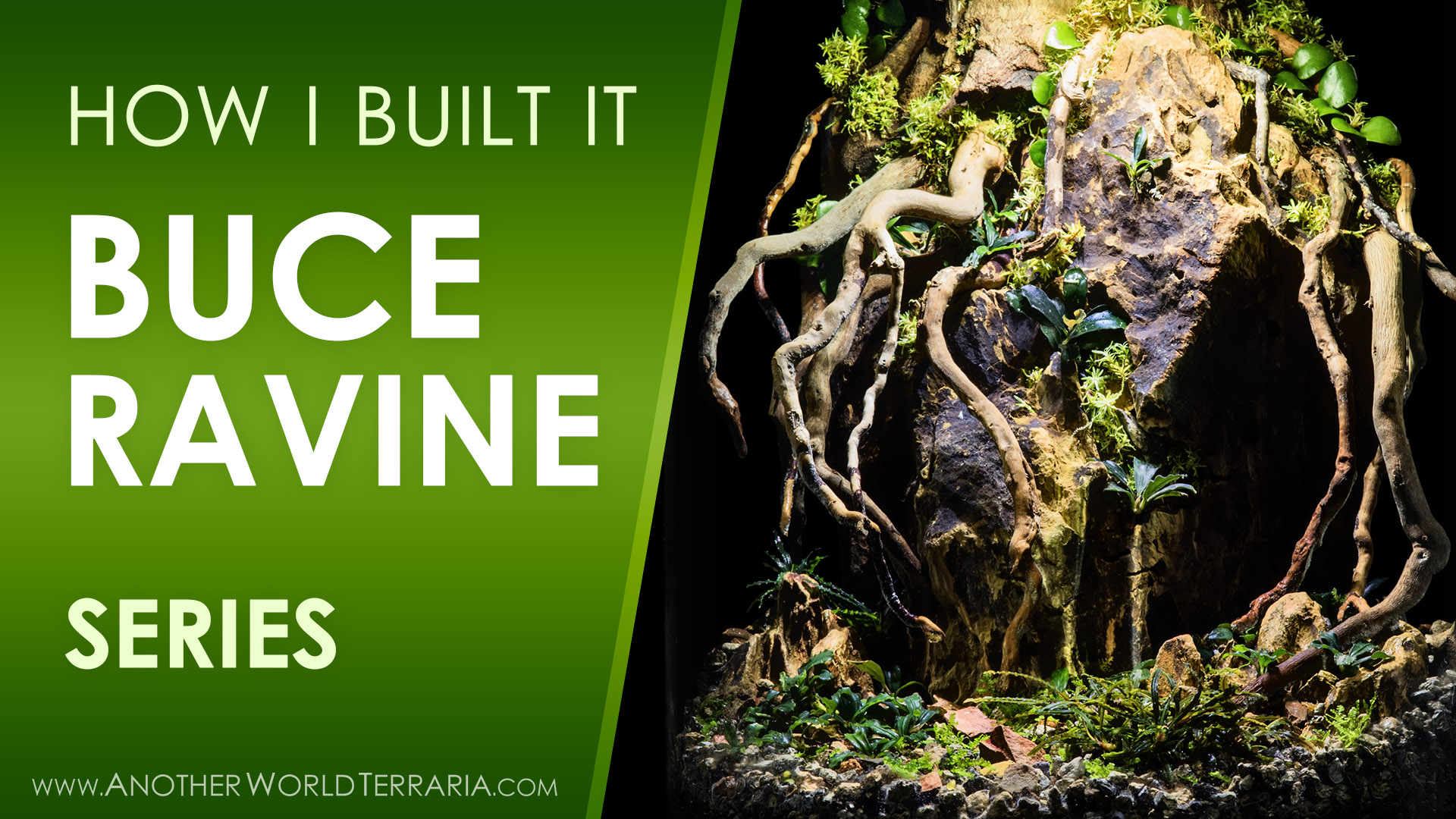 How I Built the Buce Ravine Terrarium Video Series