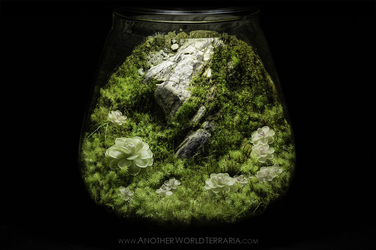 Cliffside Ping Jar Terrarium