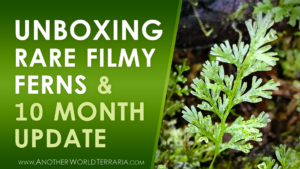 Unboxing rare filmy ferns plus 10 month growth update