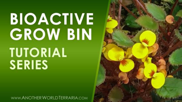 Bioactive Grow Bin Tutorial Series