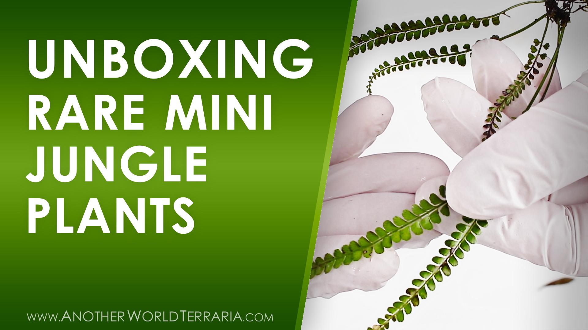 Unboxing rare mini jungle plants