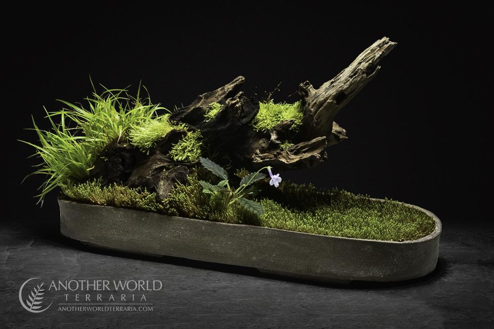Forest's Edge Kusamono