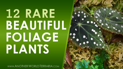 12 rare beautiful foliage plants