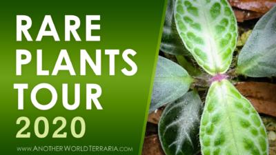 Rare Terrarium Plant Collection Tour 2020