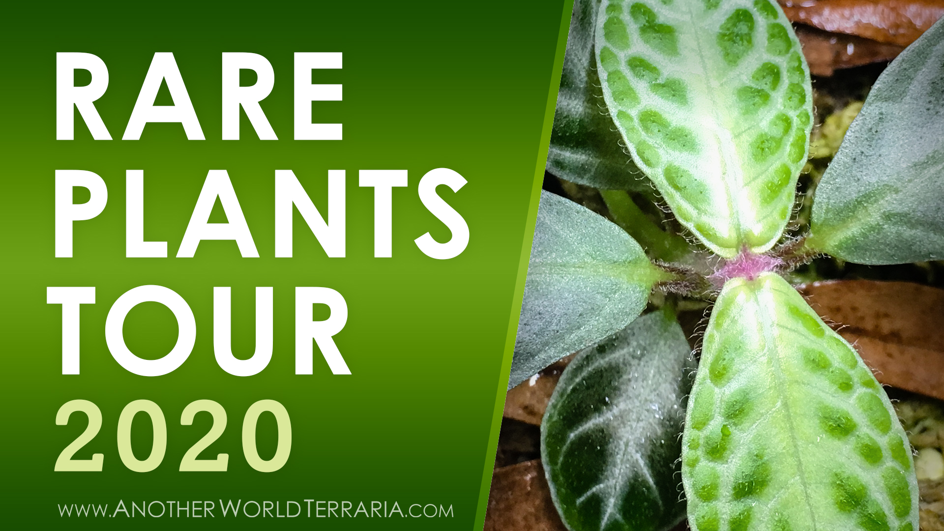 Rare Terrarium Plant Collection Tour 2020