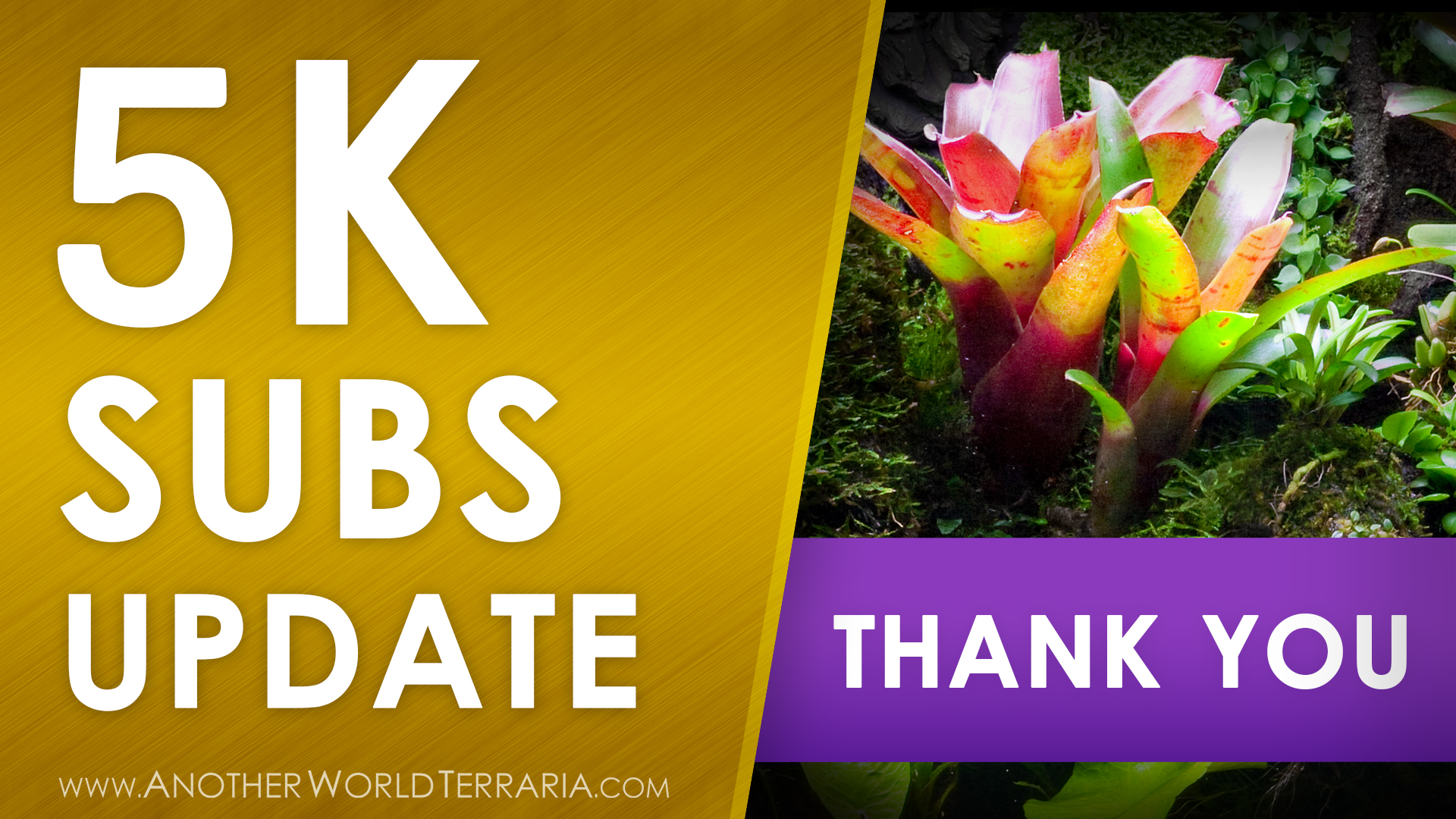Another World Terraria 5K subscribers update