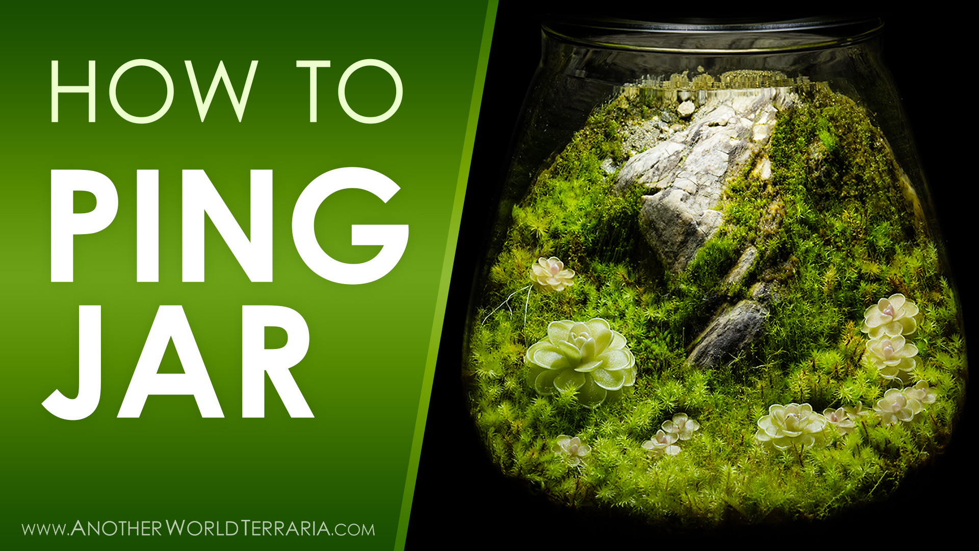 How I Made the Cliffside Ping Jar Terrarium
