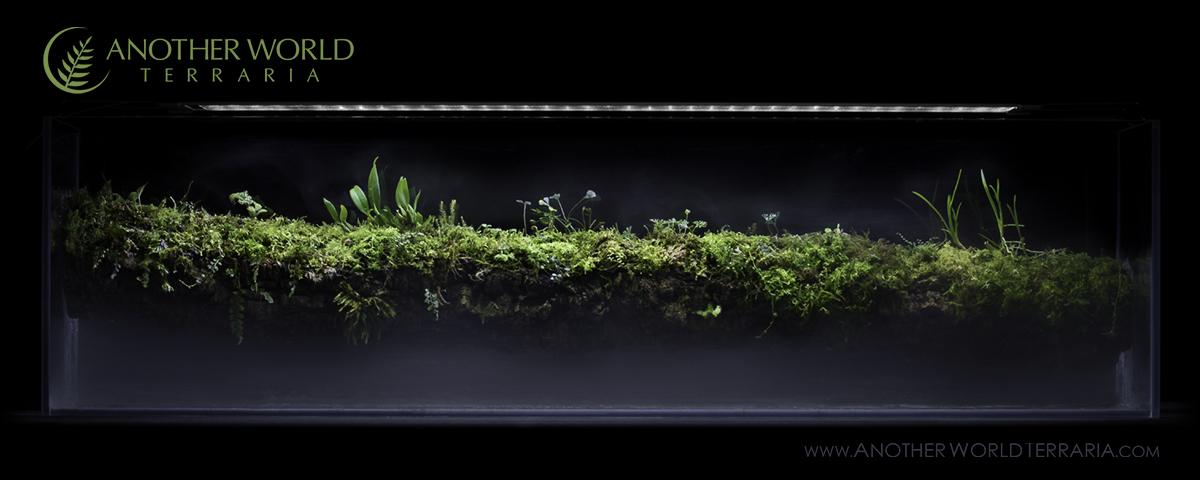 Brancharium