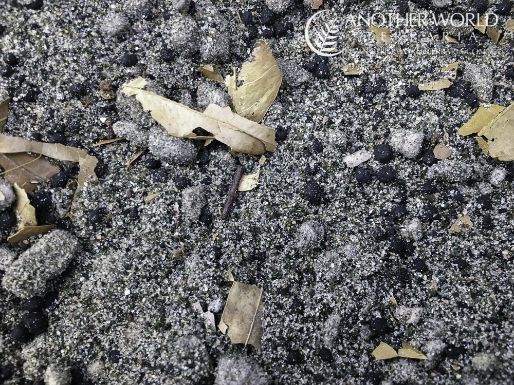 Substrate mix with sand, pumice, Fluval Stratum, and crushed willow-oak leaves