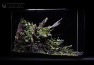 Crown Forest Terrarium