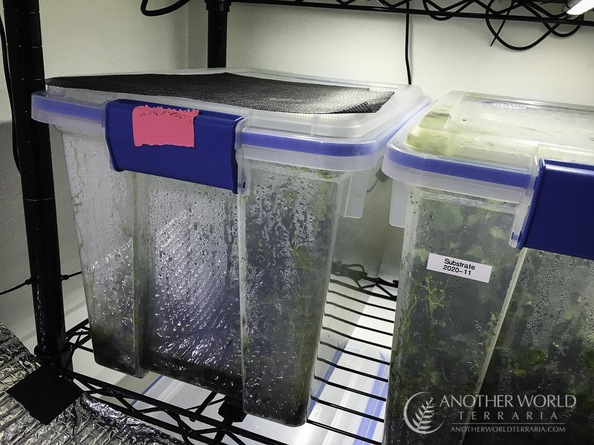 Filmy fern grow bin setup