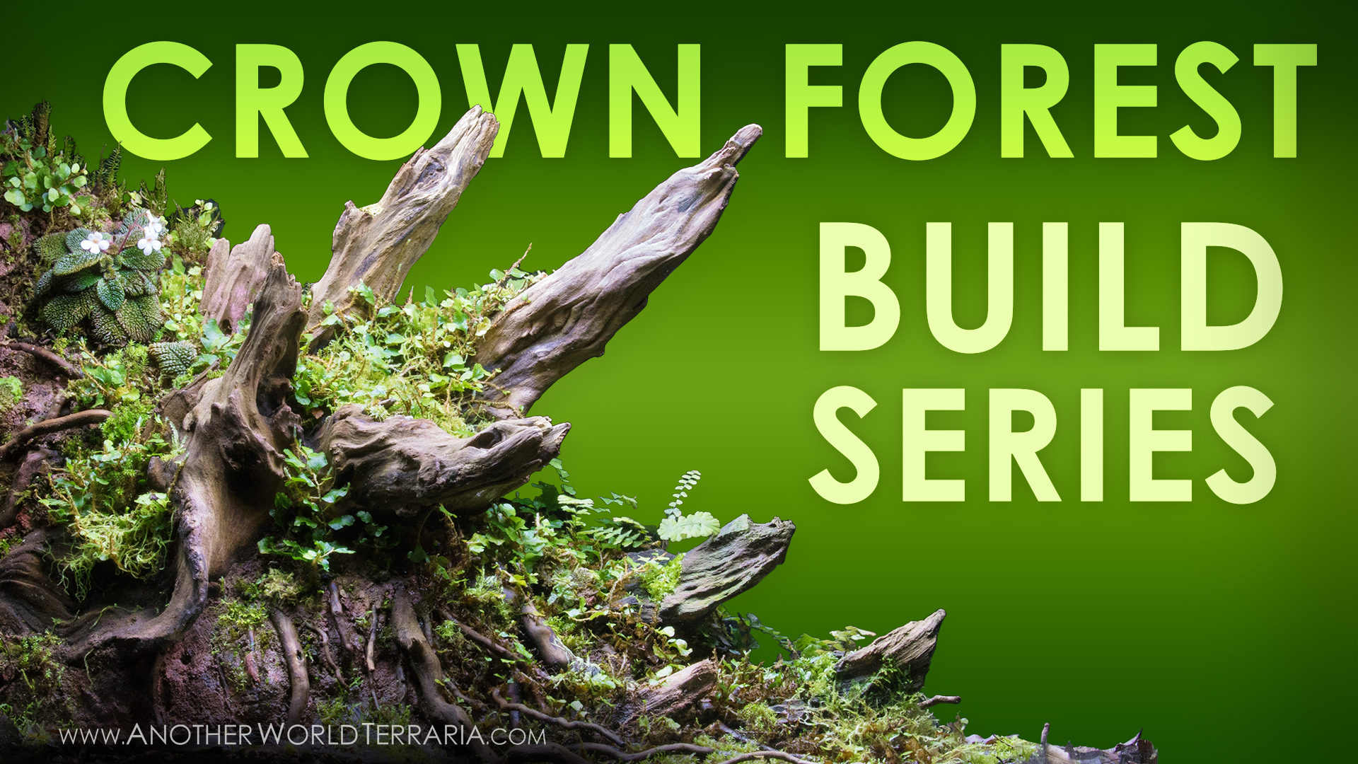 Crown Forest Terrarium Build Series