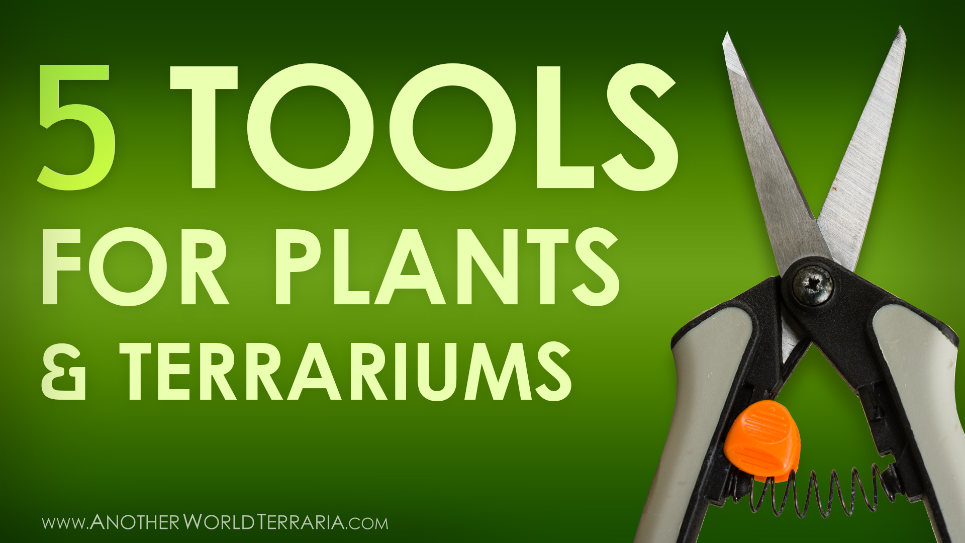 5 Most Used Tools for Horticulture & Terrariums - Photo of Micro Shears