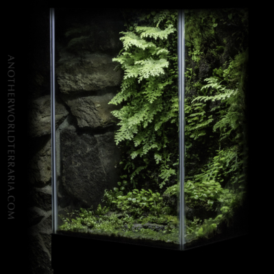 The Cliff Drip Wall Terrarium