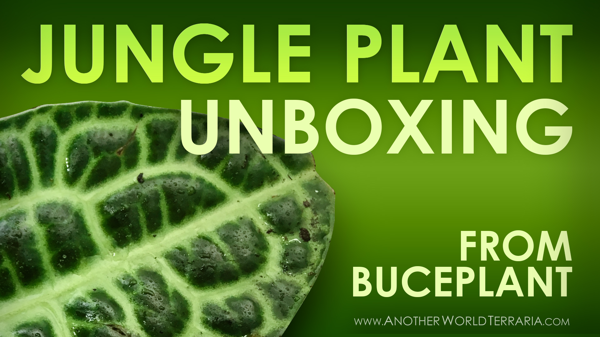 Jungle Plant Unboxing from Buceplant