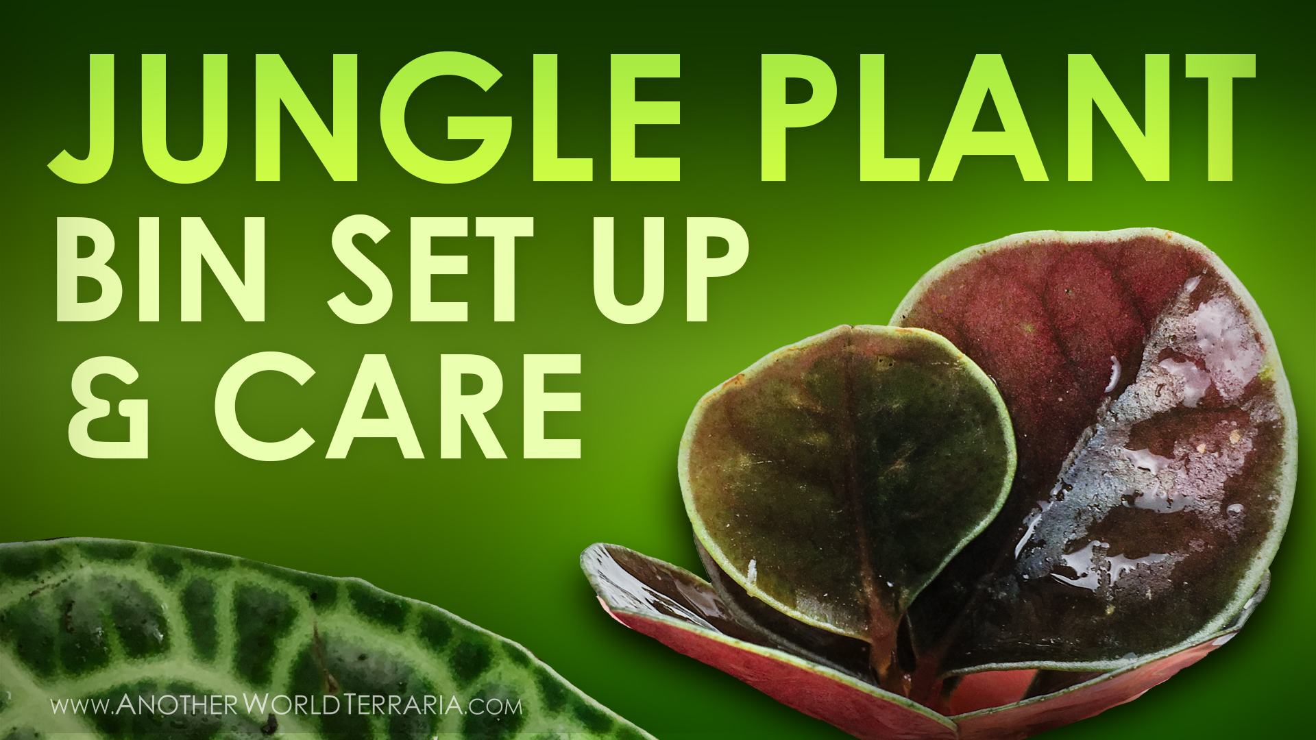 Jungle Plant Bin Setup and Care